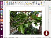 Erstellung eines Dokuments in LibreOffice 5
