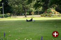 Kann es etwas Schöneres geben als ein Picknick in der Natur?