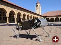 Stanford Doggo